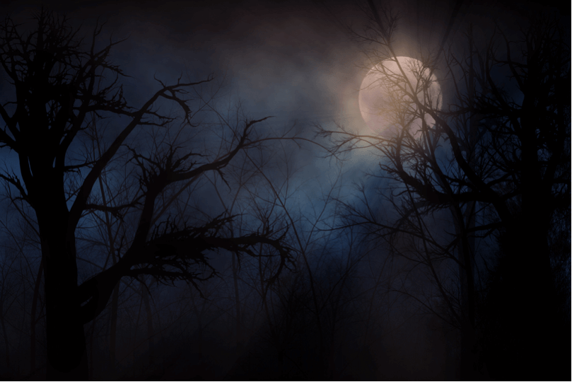 dark forest with a full moon in the background